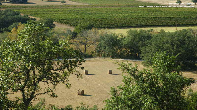 vineyard fields and trees aerial view