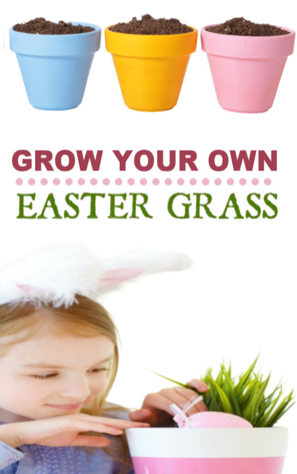 Here is a fun project that the kids will love!  Grow your own Easter basket grass. #easterbasketideas #eastercrafts #growgrassforeasterbasket #easteractivitiesforkids #easterbasketdiy #growingajeweledrose