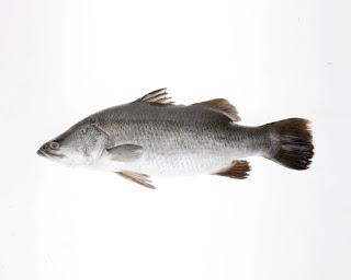 تفسير مشاهدة السمك في منام العزباء