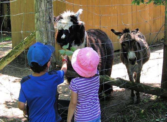 Children feeding llama and donkey.