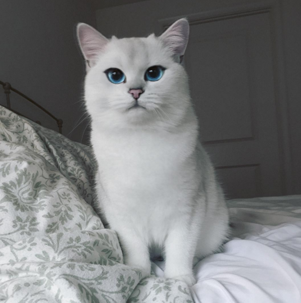 MENARIK! Gambar Kucing Diiktiraf Paling Cantik Di Dunia Cetus Daya Tarikan