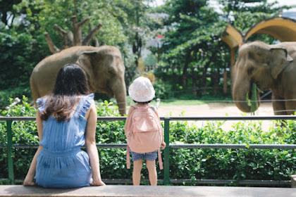 Tips Berkunjung ke Kebun Binatang Ragunan Bersama Keluarga