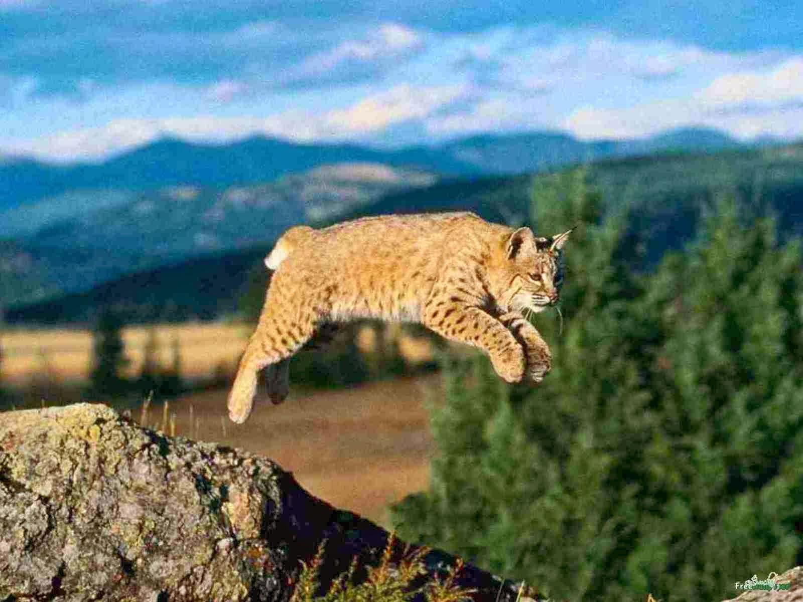 Hd Unique Wild Wallpaper: Amazing-Beautiful-Rabbit-Dangerous-Wildlife-Predators
