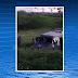 Criminosos explodem carro-forte e trocam tiros com seguranças na PE-180 em São Bento do Una,PE