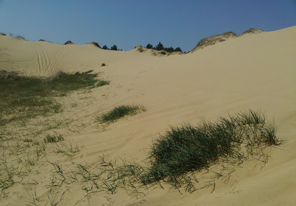 Национальный природный парк «Олешковские пески»