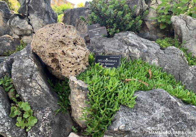 Jardín rocoso Jardín Botánico Sofía Bulgaria