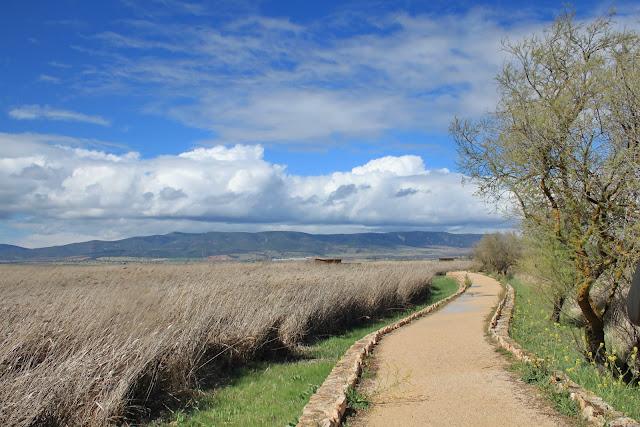 Itinerario a la torre de Prado Ancho - Tablas de Daimiel