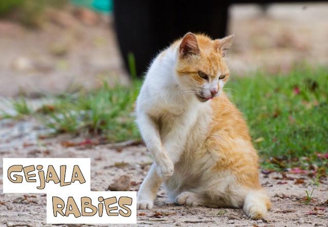 Vaksin Rabies Kucing