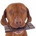Pourquoi le chocolat est-il dangereux pour les chiens ?