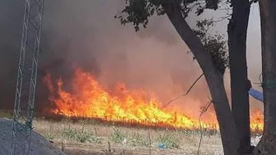 سليانة : حريق يأتي على مئات الهكتارات  من الحبوب
