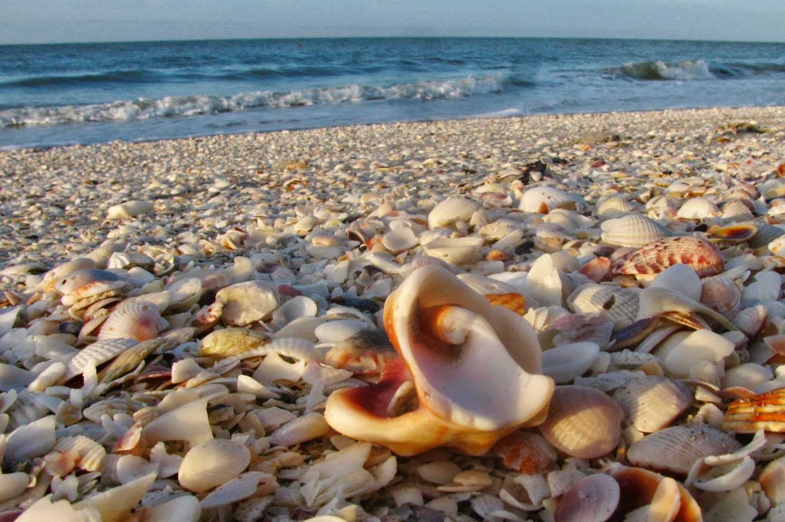Sanibel Island Shells: Life In Robin's Nest: Tropical Getaway