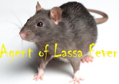 lassa fever kills nursing student anambra state