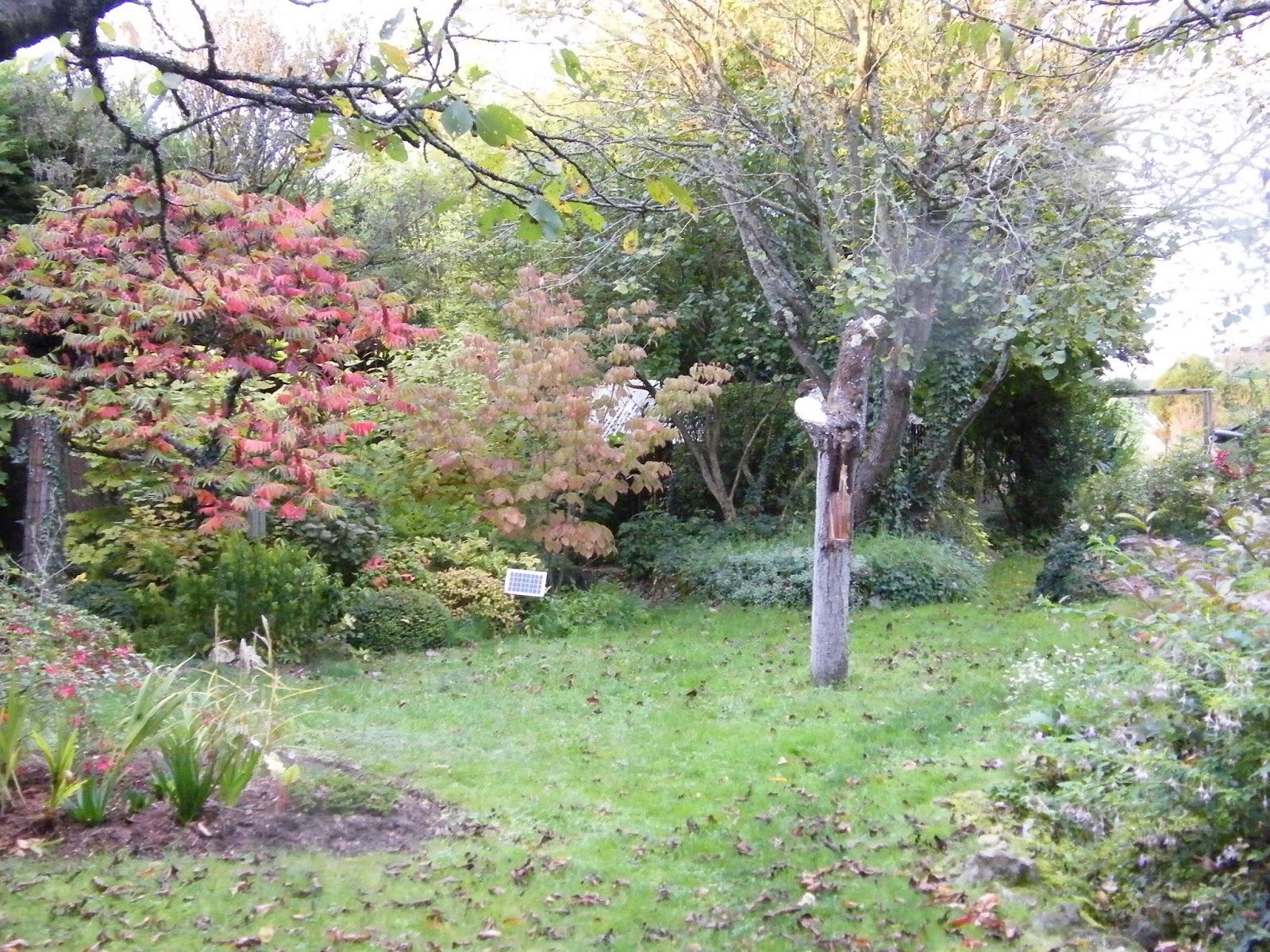 Au gré du jardin: Pas d\'EHPAD pour les vieux arbres...