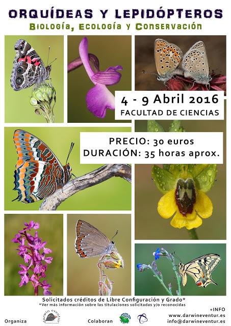 orquideas y lepidopteros