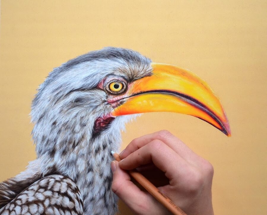 06-Billed-Hornbill-Julia-M-www-designstack-co