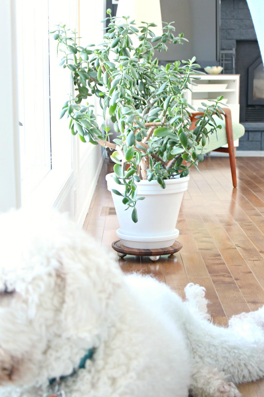 Easy DIY Plant Dolly