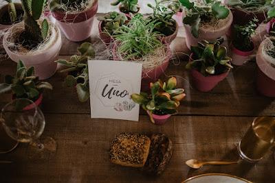 boda tematica cactus