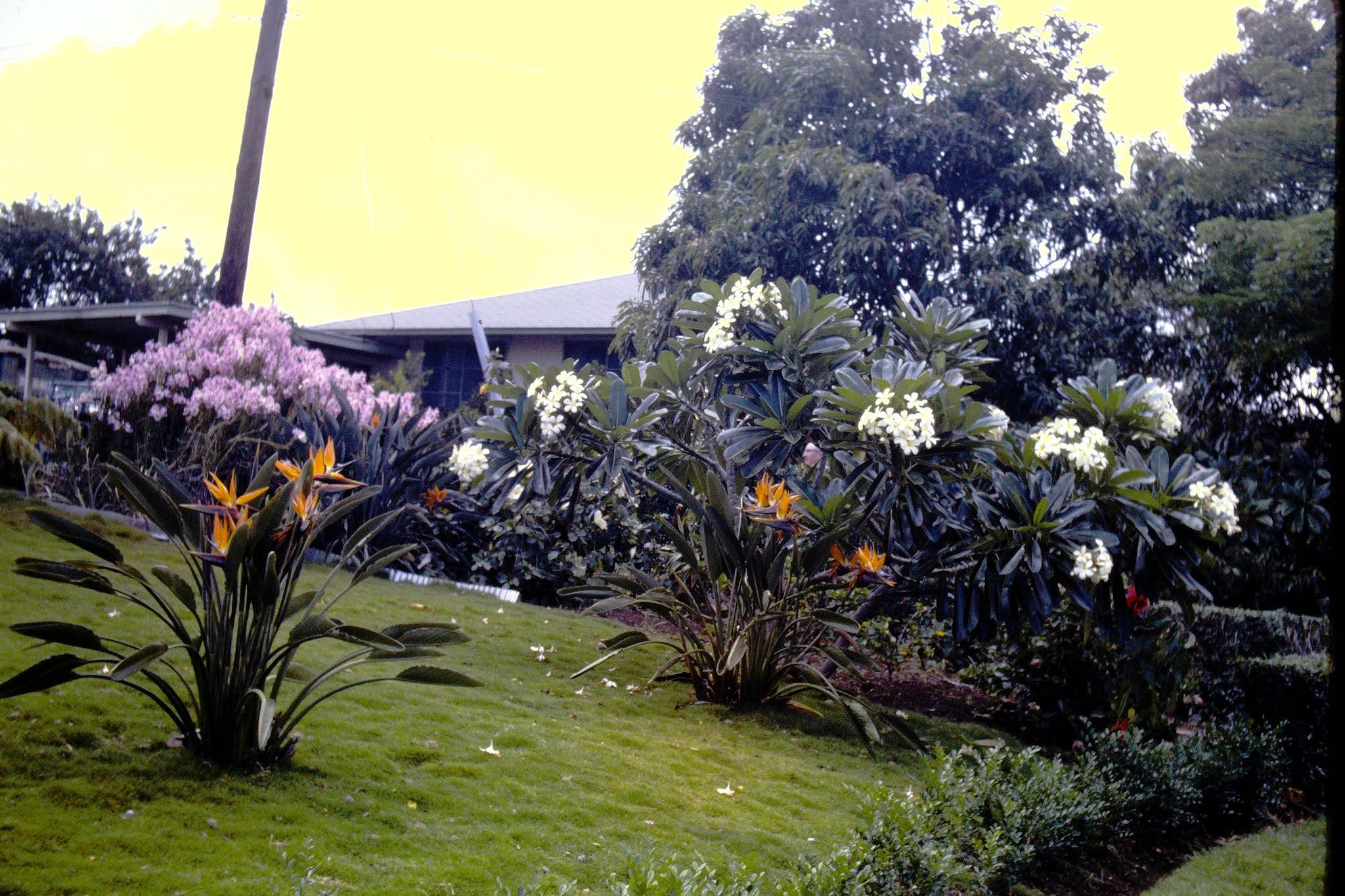 A Pretty Garden - Oahu - 1961