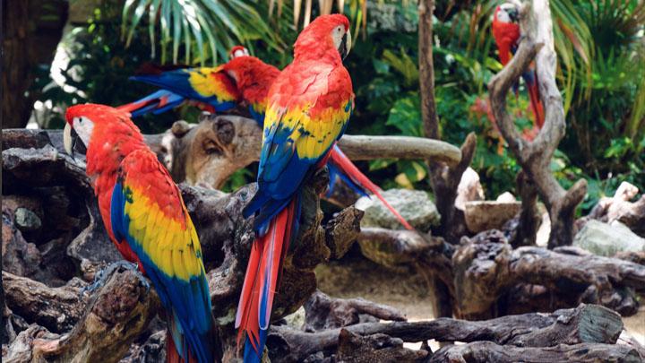 choosing a parrot