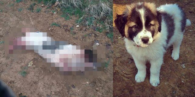 Σουφλί: Έπνιξαν και κρέμασαν τον σκύλο στελέχους του δήμου τη μέρα της πρόσληψής του