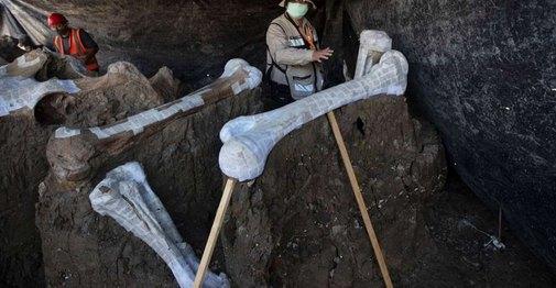 Μεξικό... Βρέθηκαν πάνω από 100 σκελετοί μαμούθ