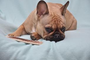Dog Chef : la ration ménagère livré à domicile ; l'avis de Oh My Boubous