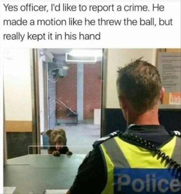 Well done you good boy