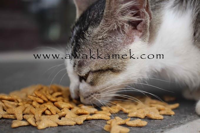 Kucing Makan Di Tepian Auditorium Untan