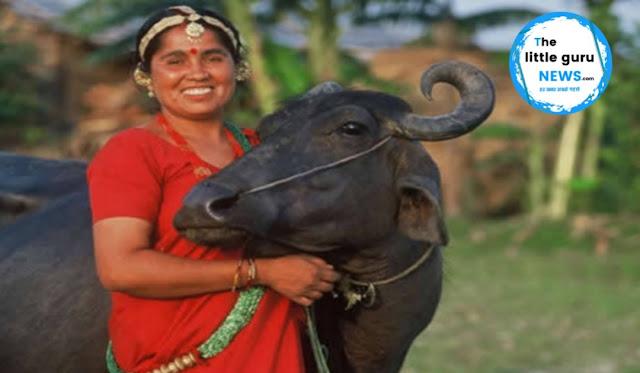 पशुओं को बाढ़ के पानी या गंदे पानी से भींगा चारा देने से करे परहेज- डॉ. शैलेंद्र
