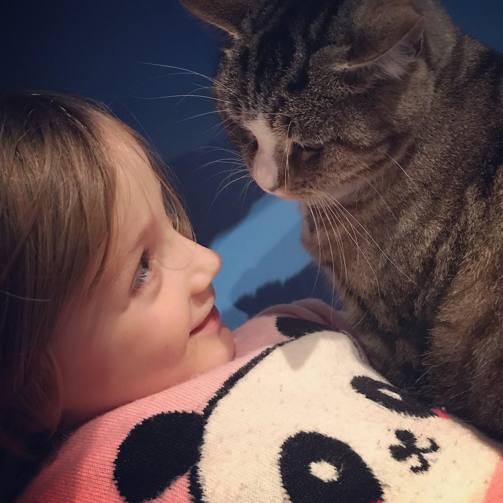 chat enfant