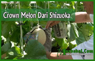 Crown Melon Dari Shizuoka