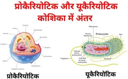 prokaryotic and eukaryotic difference in hindi