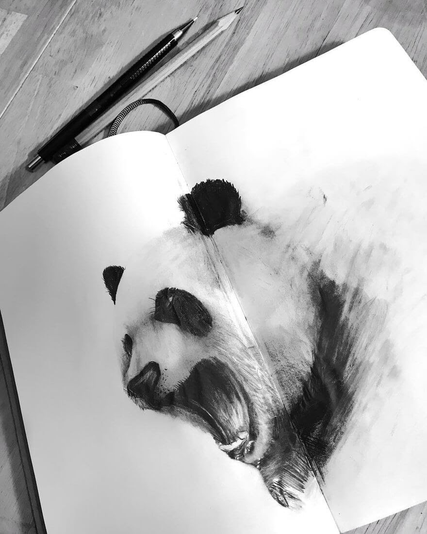 13-Panda-Jonathan-Martinez-Animal-Drawings-with-Colored-Pencils-www-designstack-co