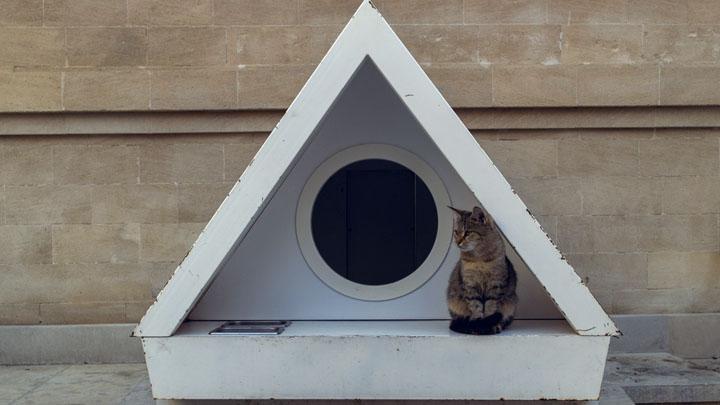 cat safe house plants