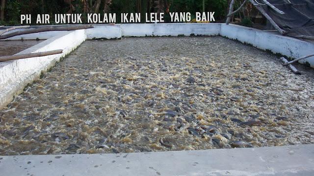 PH Air yang Baik Untuk Ikan Lele