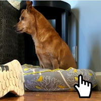 https://www.calangodocerrado.net/2018/04/simulando-estar-morto-na-frente-do-cachorro.html