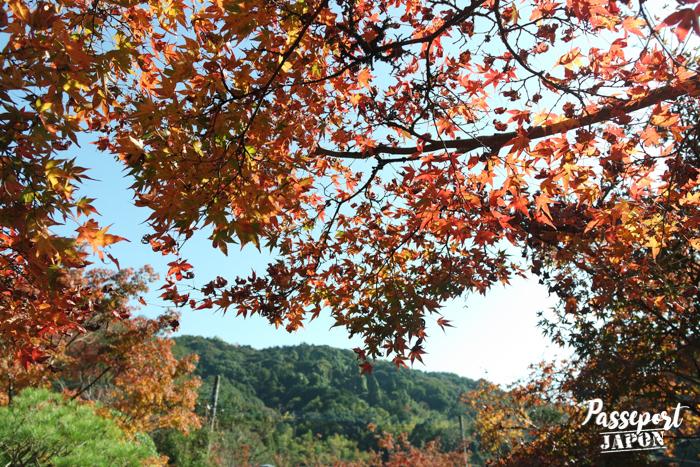 Momiji et ciel bleu, Kunenan de Kanzaki, Saga