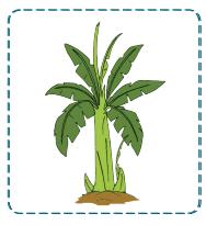 gambar pohon pisang www.jokowidodo-marufamin.com