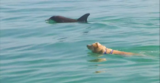 Ежедневно этот песик приходит к своему другу, чтобы вместе поплавать