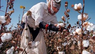 Sự Khác Nhau Khăn Tắm sợi Cotton, Khăn Tắm sợi Microfiber