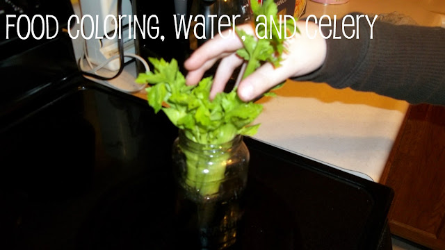 Celery Food Coloring Experiment