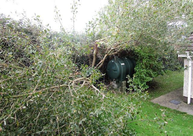 öljysäiliö, kaatunut puu