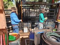 Dari NT Australia, Gubernur Zul Rencana Bangun Pabrik Pakan Ternak di NTB