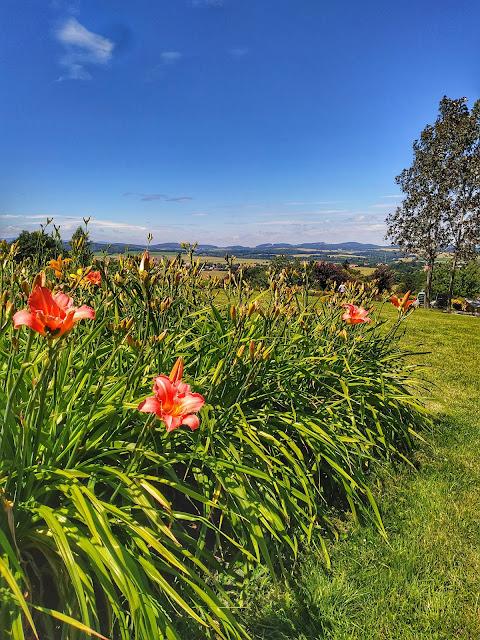 kolekcja narodowa liliowców w ogrodzie botanicznym w Wojsławicach