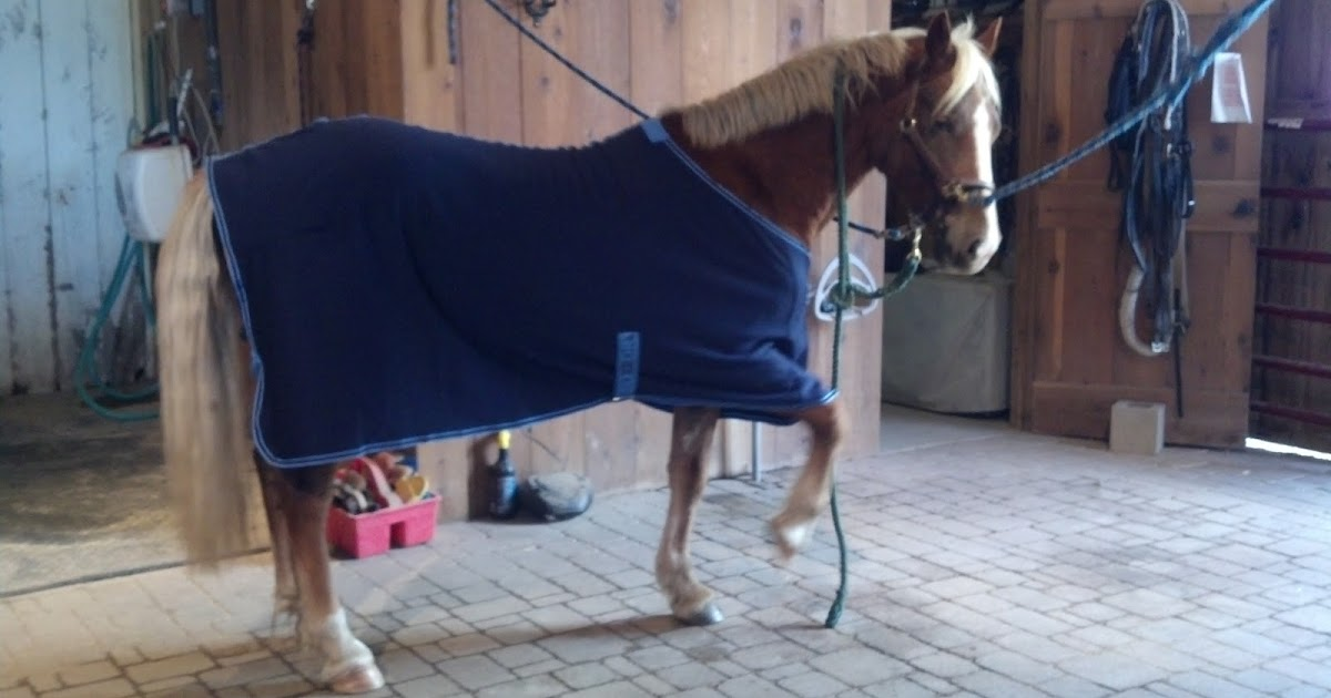 Centaur Turbo-Dry Cooler with Neck Cob Orchid
