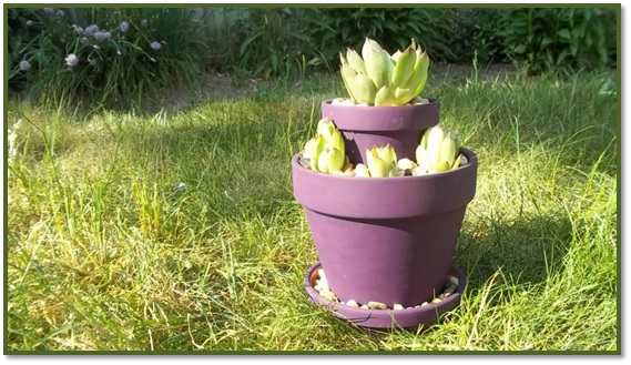 Two Tiered Hens and Chicks Planter