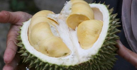 Apakah Boleh Ibu Hamil Makan Buah Durian