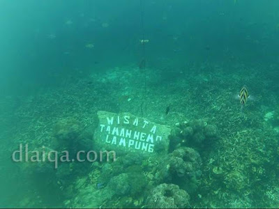hasil foto bawah air (1)