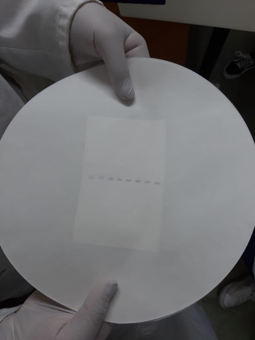 JunYe Regla de la Prueba de inspecci/ón del Orificio del Hueco del calibrador del calibrador de la galga de la Forma c/ónica de la Soldadura del Acero Inoxidable Pulgada//mil/ímetro