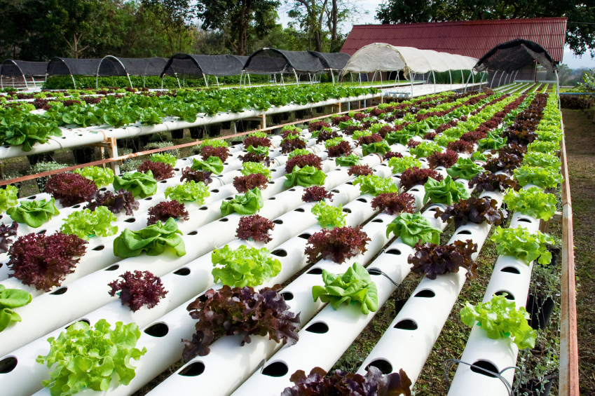 Teknik Pertanian Informasi Jabatan Karir